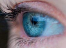 anatomie-oeil-pathologie
